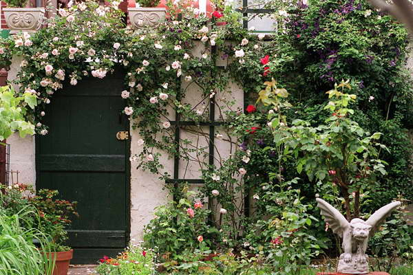 Плетистая роза в дизайне двора фото
