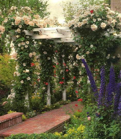 Плетистые розы на навесе перед домом фото