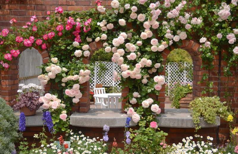 Плетистые розы в беседке фото