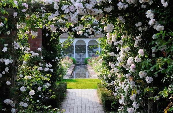 Плетистые розы в дизайне сада фото