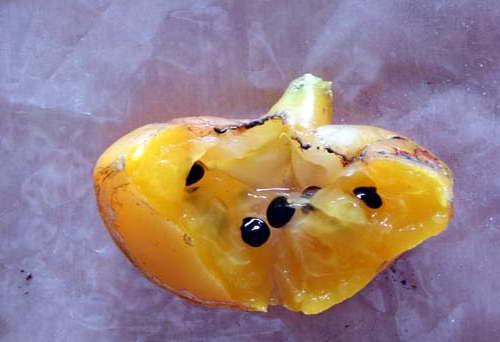 Плод и семена перескии фото