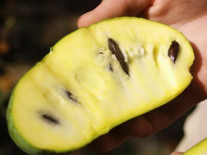 Плоды азимины трехлопастной фото