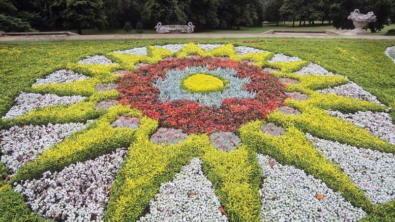 Почвопокровники многолетние цветущие с весны до осени фото и названия