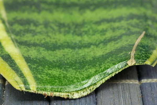 Подсушите срезы на листовом черенке сансевиерии