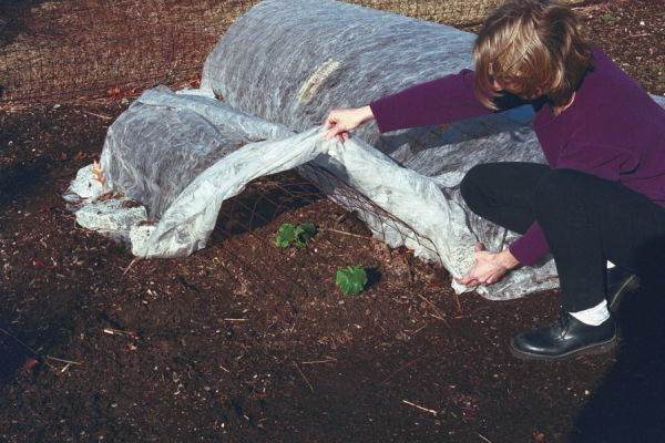 Посадка огурцов в парник семенами