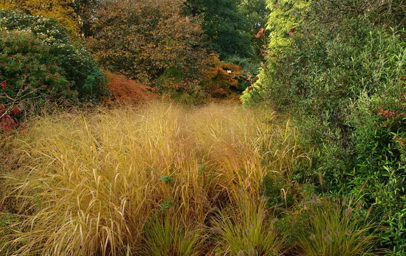 Просо прутьевидное паникум виргатум в ландшафтном дизайне фото