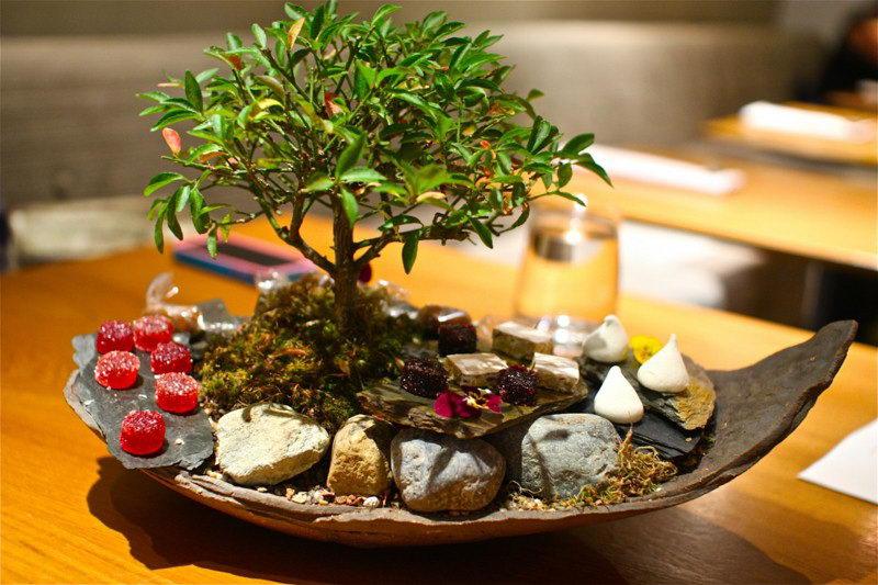 Растения для бонсай фото