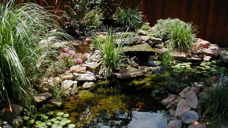 Растения пресного водоема с фото и названиями