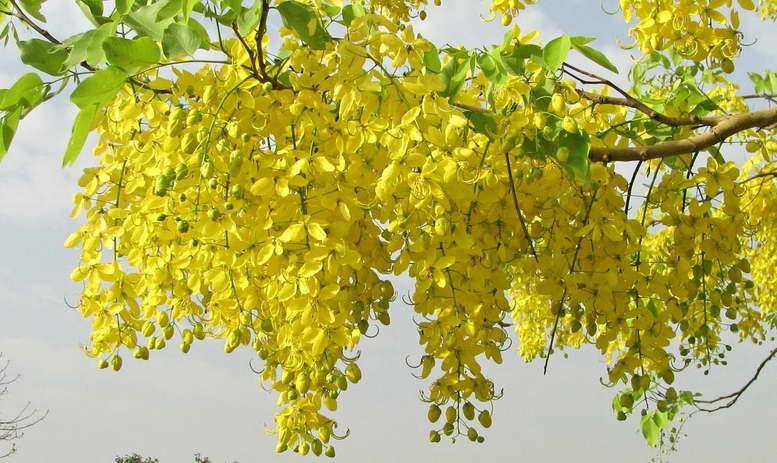 Растения семейства бобовые фото и названия