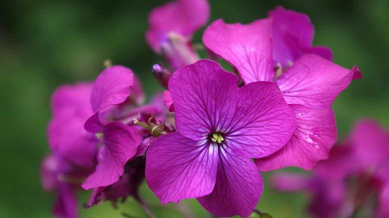 Растения семейства крестоцветных или капустных с фото и названиями