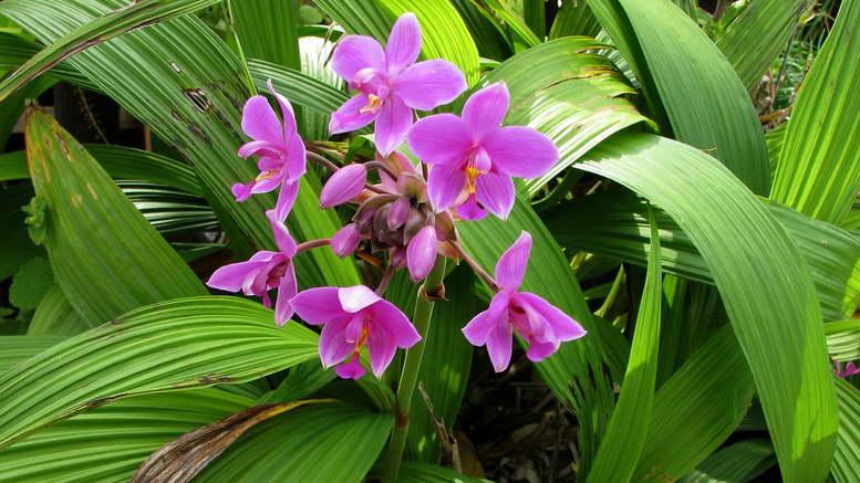 Растения семейства орхидные фото и названия
