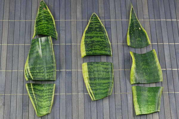Размножение сансевиерии листом фото