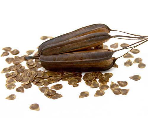 Семена аристолохии фото