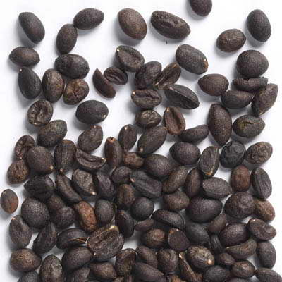 Семена бирючины фото