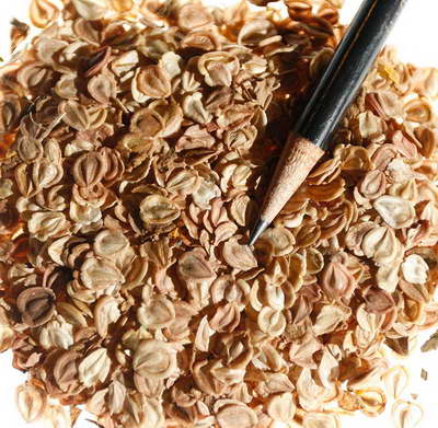Семена диморфотеки фото