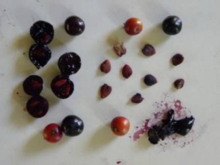 Семена и плоды дуранты фото