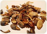 Семена калатеи фото