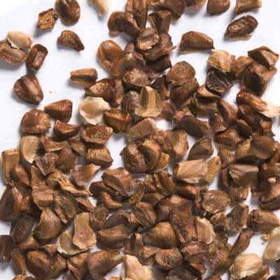 Семена кипарисовика фото