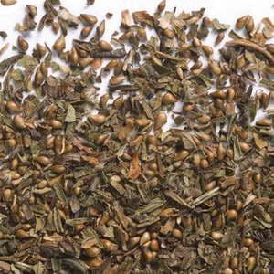 Семена лапчатки фото