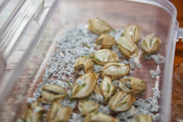 Семена немезии фото