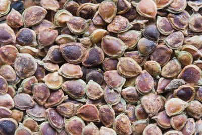 Семена ранункулюса фото