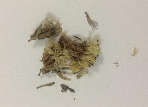 Семена статицы фото