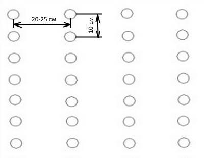 Схема посадки свеклы в открытом грунте
