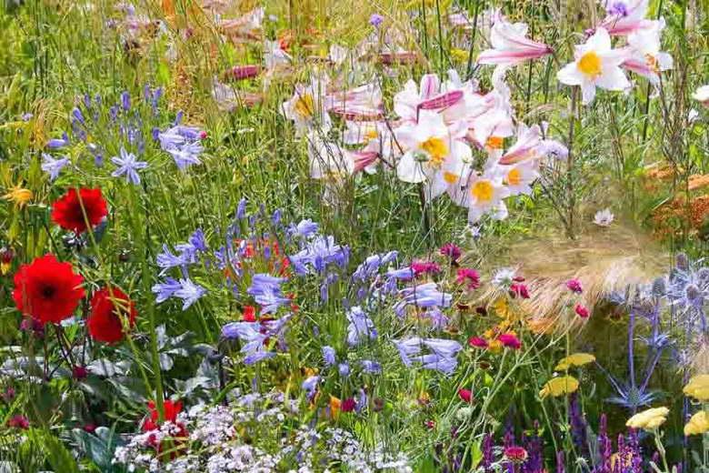 Синеголовник в миксовой посадке с полевыми цветами фото