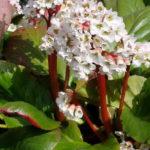 Цветы бархатцы посадка и уход фото