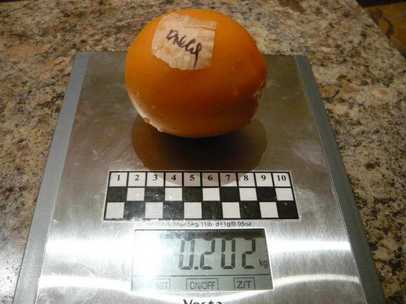 Томат Олеся отзывы фото урожайность характеристика плодов