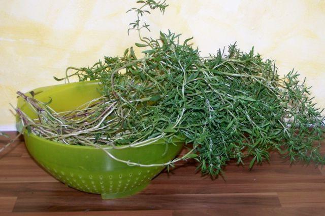 Трава чабер лечебные свойства