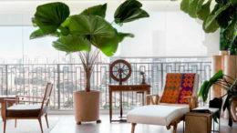 Веерная пальма в домашних условиях фото