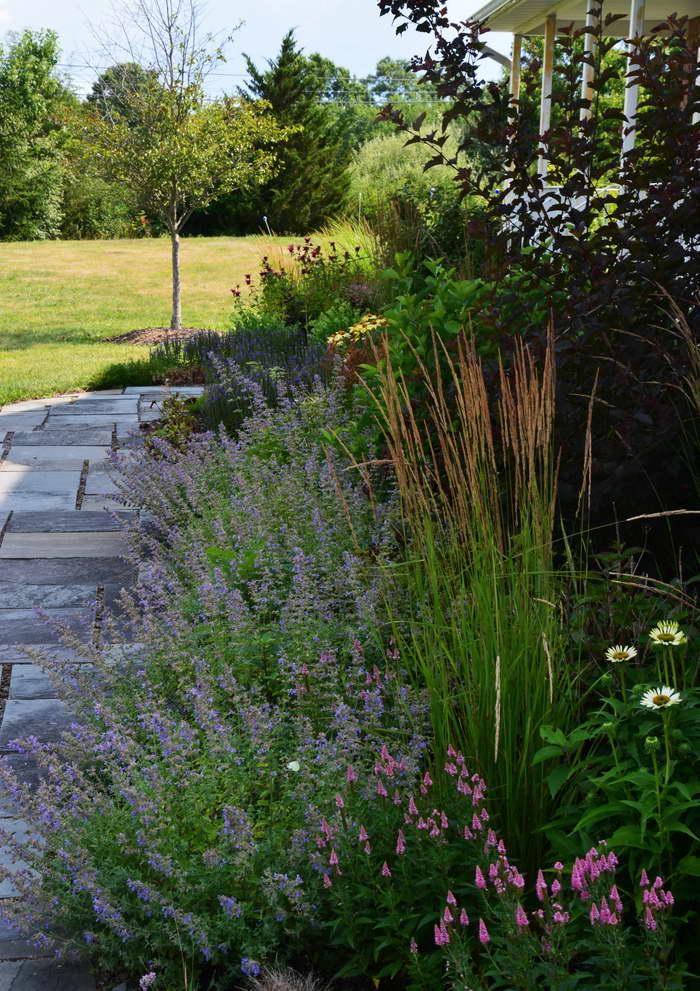 Вероника колосистая в дизайне сада