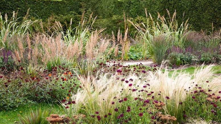 Вейник остроцветковый в ландшафтном дизайне фото