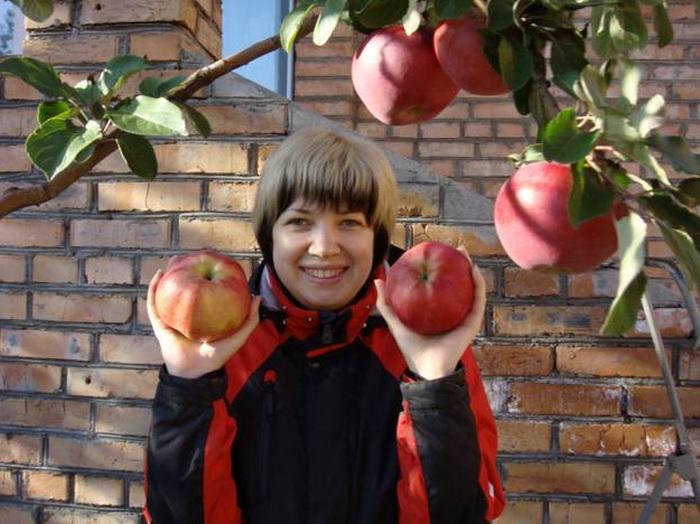 Яблоня апорт кроваво красный описание фото