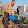 отзывы о томате Алтайский оранжевый