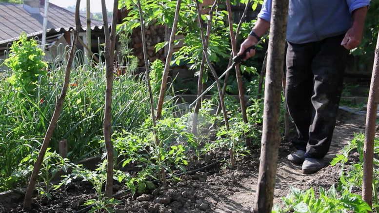 Раствор борной кислоты для помидоров опрыскивание пропорции